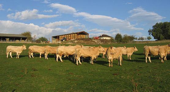 Tonello troupeau dans le pré
