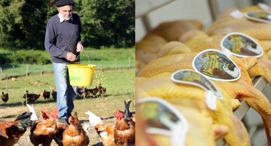 Volailles Dumas à la boucherie Lazinière